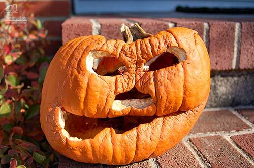 shriveled pumpkin